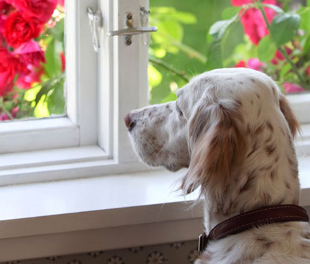dog looking out a window